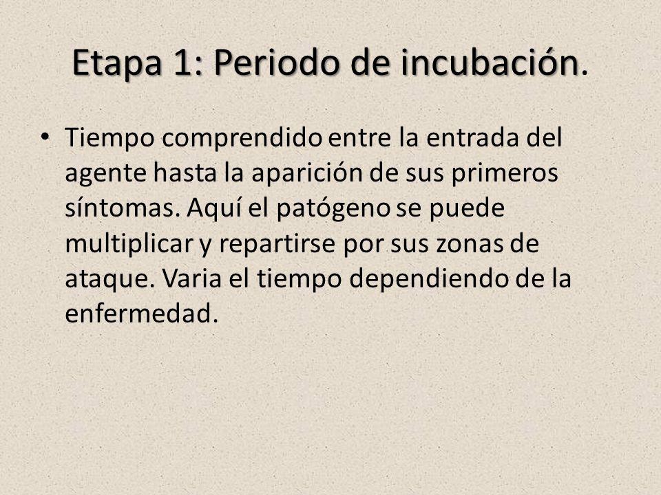 Etapa 1: Periodo de incubación.