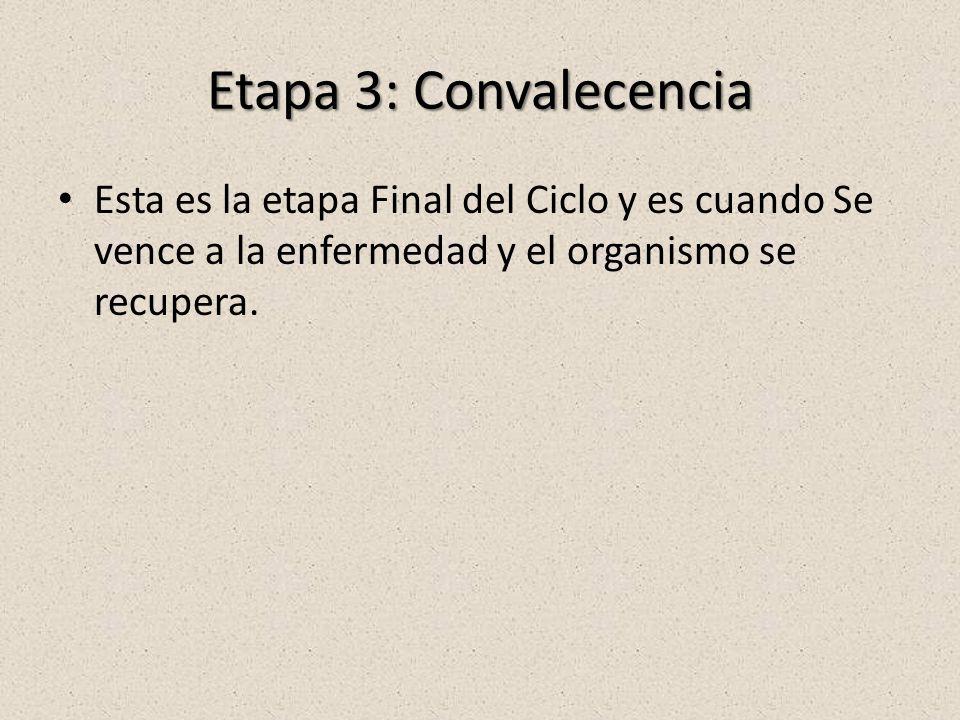 Etapa 3: Convalecencia Esta es la etapa Final del Ciclo y es cuando Se vence a la enfermedad y el organismo se recupera.