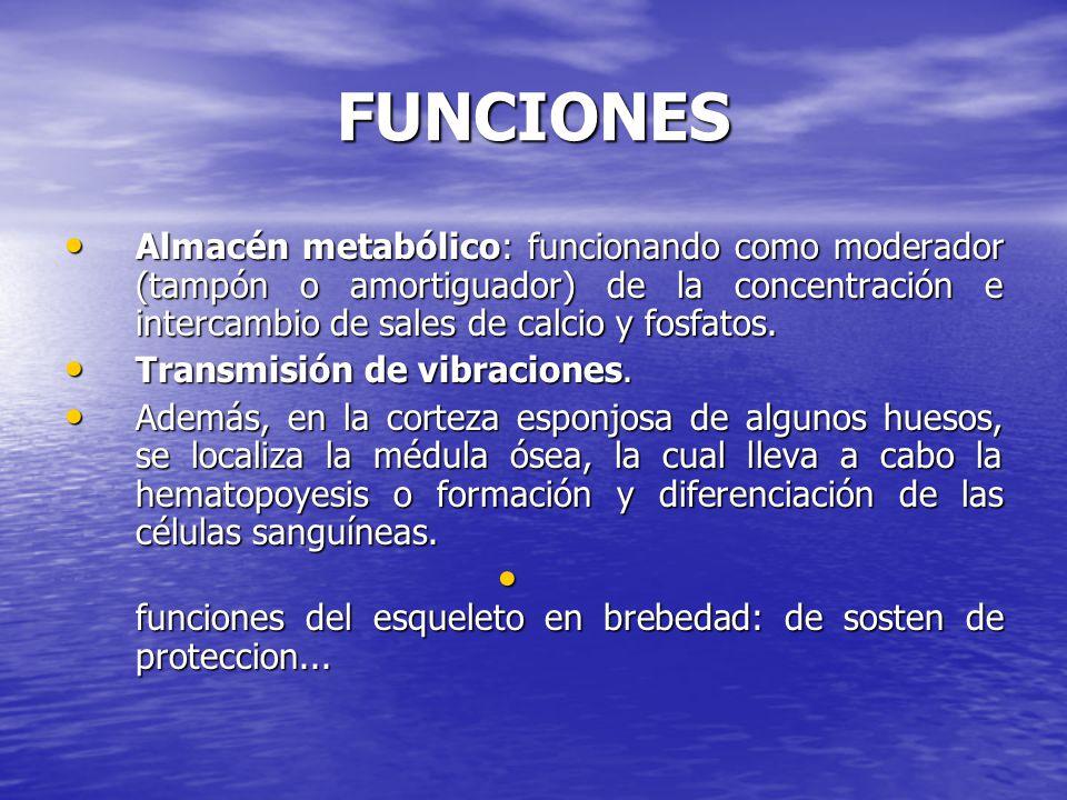FUNCIONES Almacén metabólico: funcionando como moderador (tampón o amortiguador) de la concentración e intercambio de sales de calcio y fosfatos.