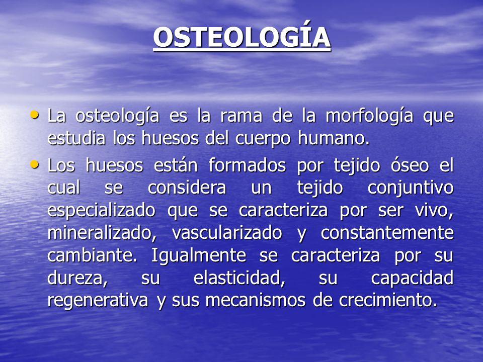 OSTEOLOGÍA La osteología es la rama de la morfología que estudia los huesos del cuerpo humano.