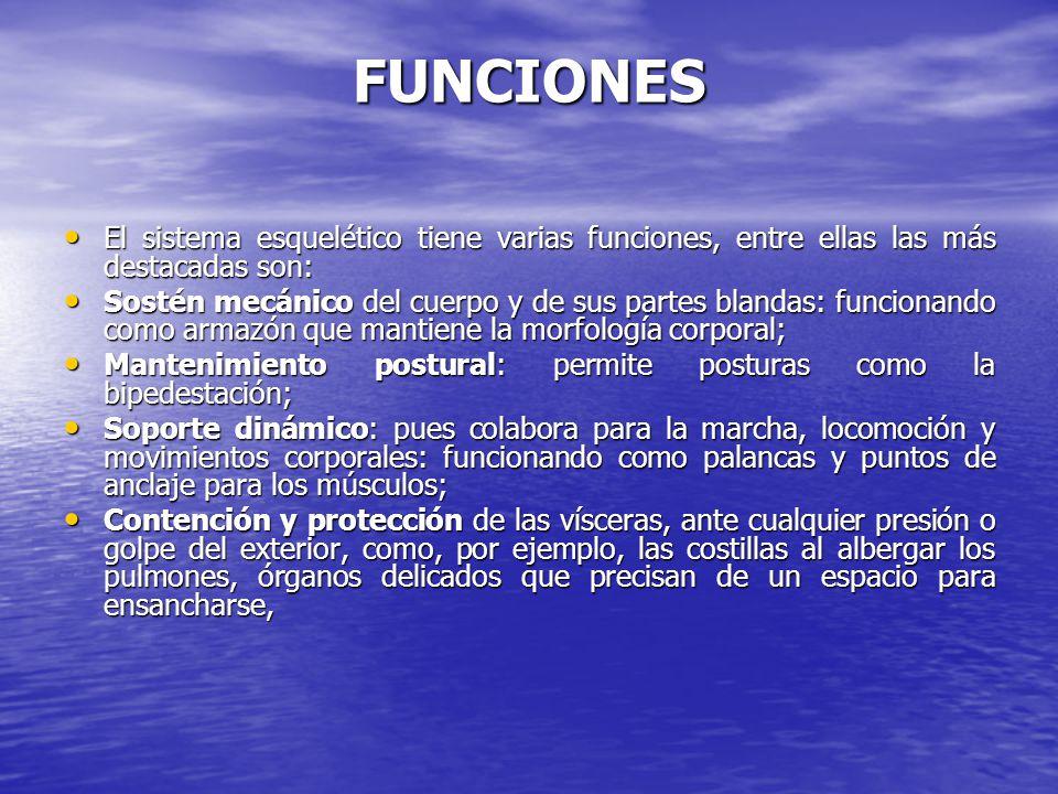 FUNCIONES El sistema esquelético tiene varias funciones, entre ellas las más destacadas son: