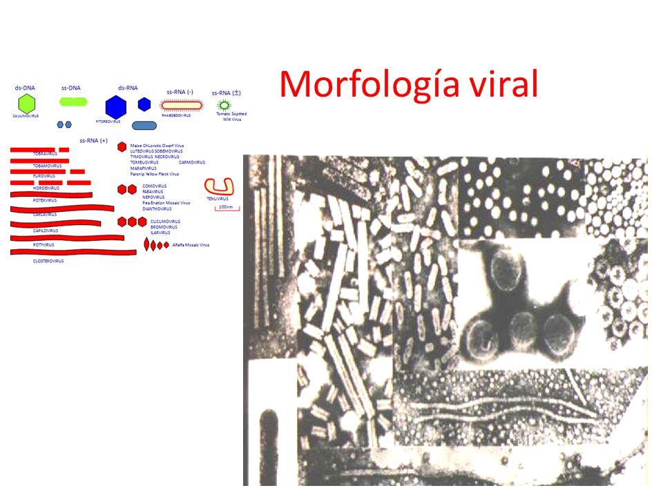 Morfología viral
