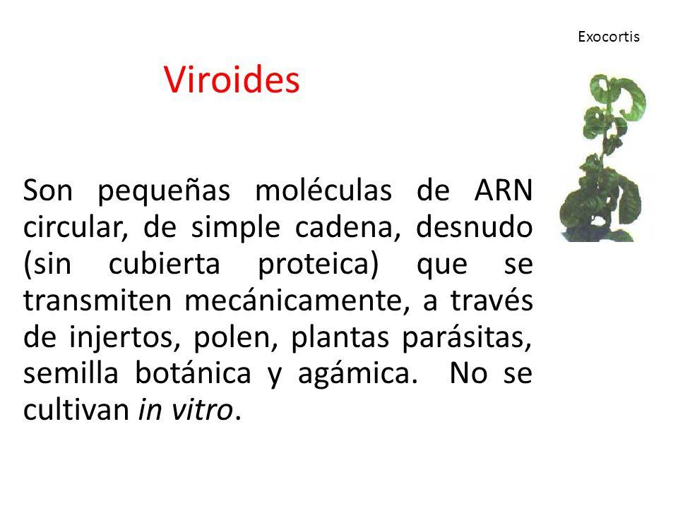 Viroides Exocortis.