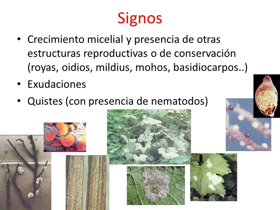 Signos Crecimiento micelial y presencia de otras estructuras reproductivas o de conservación (royas, oidios, mildius, mohos, basidiocarpos..)