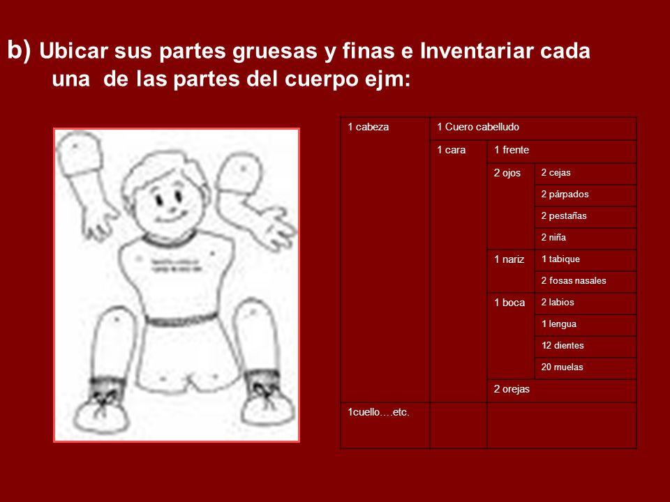 b) Ubicar sus partes gruesas y finas e Inventariar cada una de las partes del cuerpo ejm: