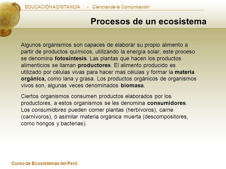 Procesos de un ecosistema