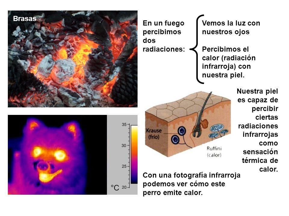 Brasas En un fuego percibimos dos radiaciones: Vemos la luz con nuestros ojos. Percibimos el calor (radiación infrarroja) con nuestra piel.