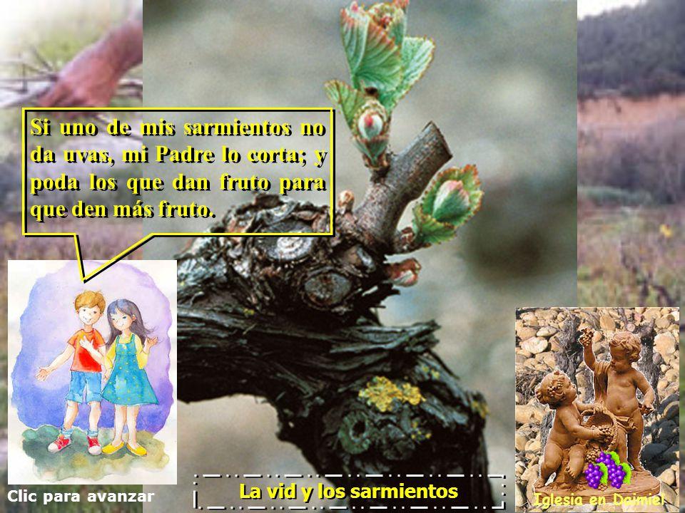 Si uno de mis sarmientos no da uvas, mi Padre lo corta; y poda los que dan fruto para que den más fruto.