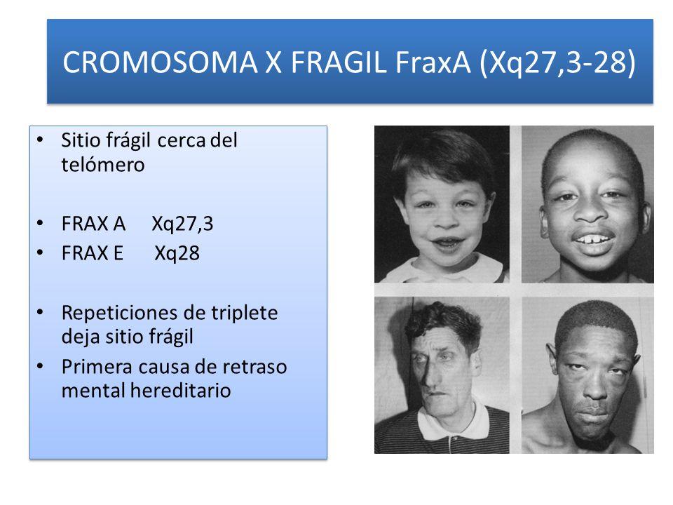 CROMOSOMA X FRAGIL FraxA (Xq27,3-28)