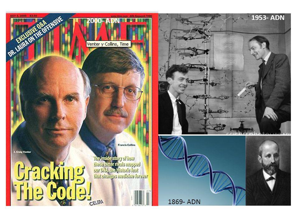 1953- ADN 2000- ADN 1869- ADN
