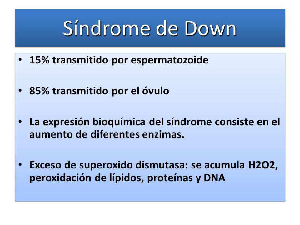 Síndrome de Down 15% transmitido por espermatozoide