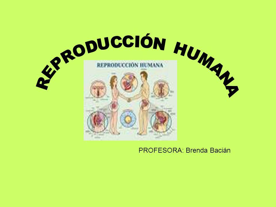 REPRODUCCIÓN HUMANA PROFESORA: Brenda Bacián
