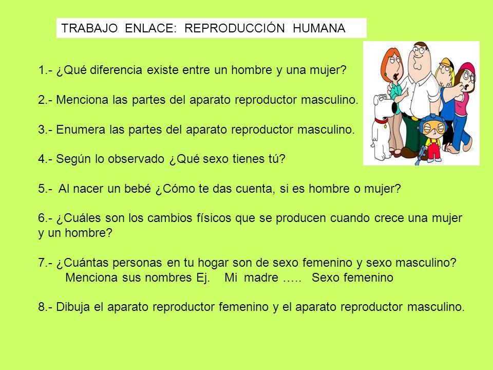 TRABAJO ENLACE: REPRODUCCIÓN HUMANA