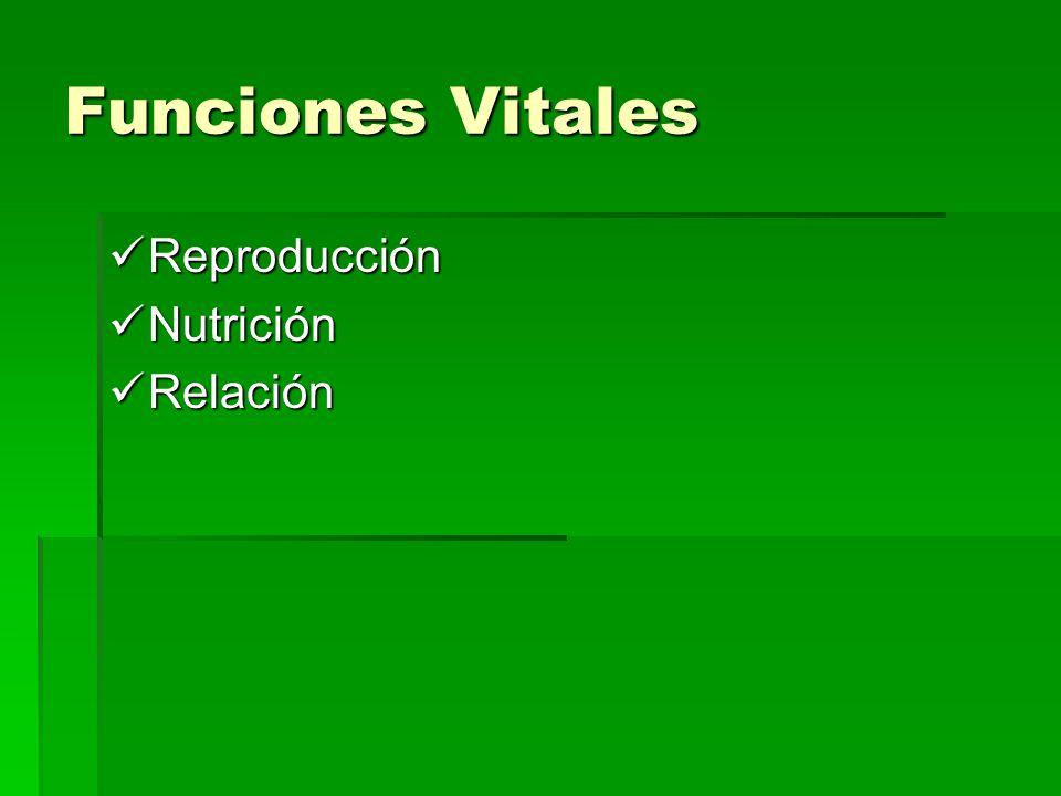 Funciones Vitales Reproducción Nutrición Relación
