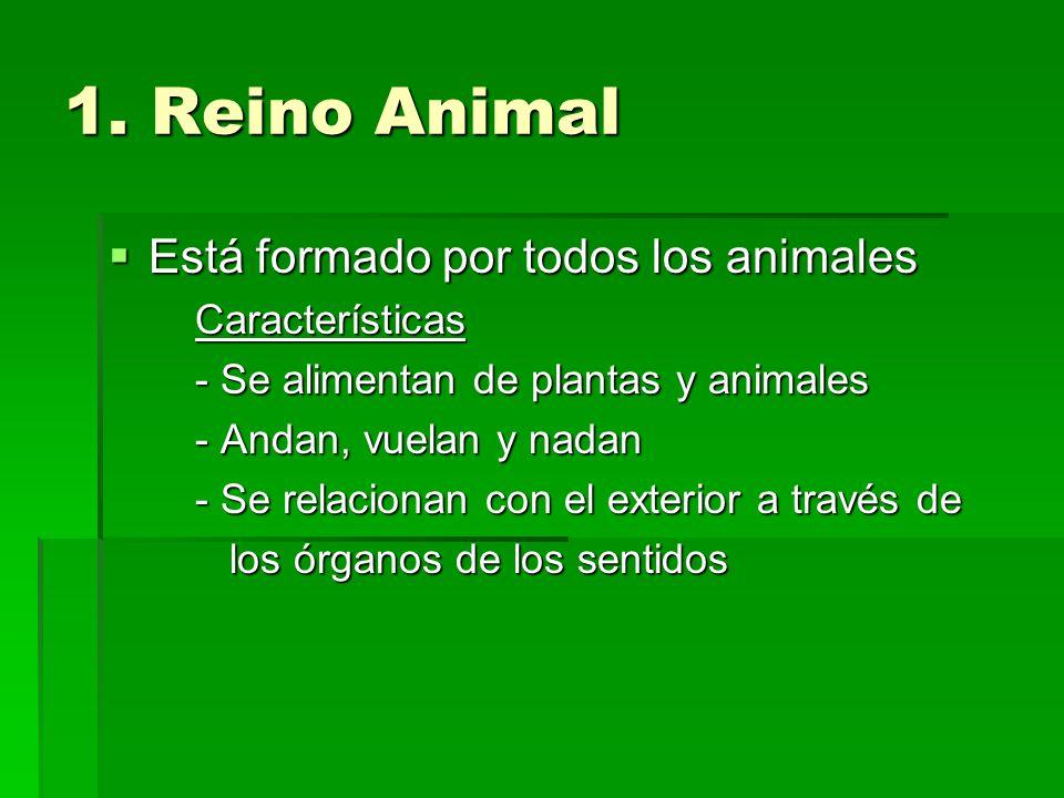 1. Reino Animal Está formado por todos los animales Características
