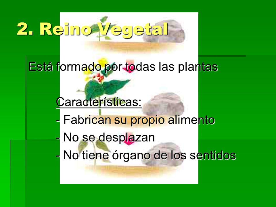 2. Reino Vegetal Está formado por todas las plantas Características: