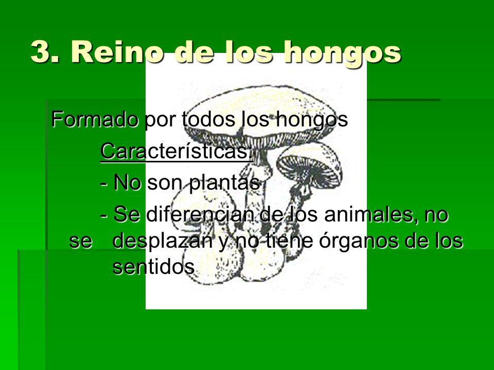 3. Reino de los hongos Formado por todos los hongos Características: