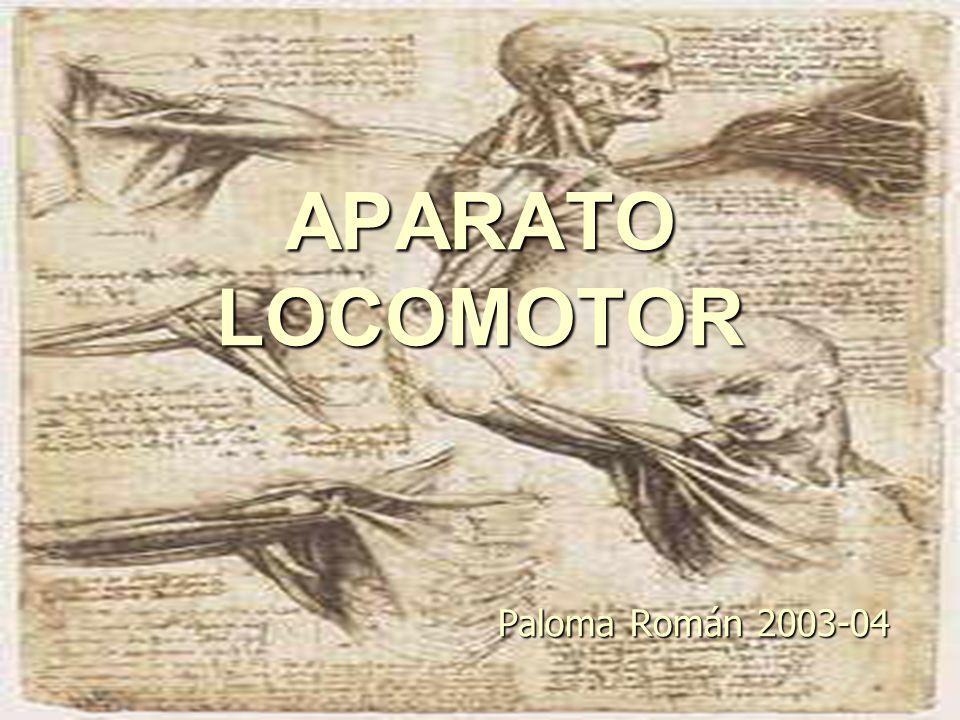 APARATO LOCOMOTOR Paloma Román ppt video online descargar