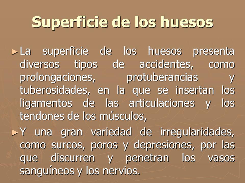 Superficie de los huesos