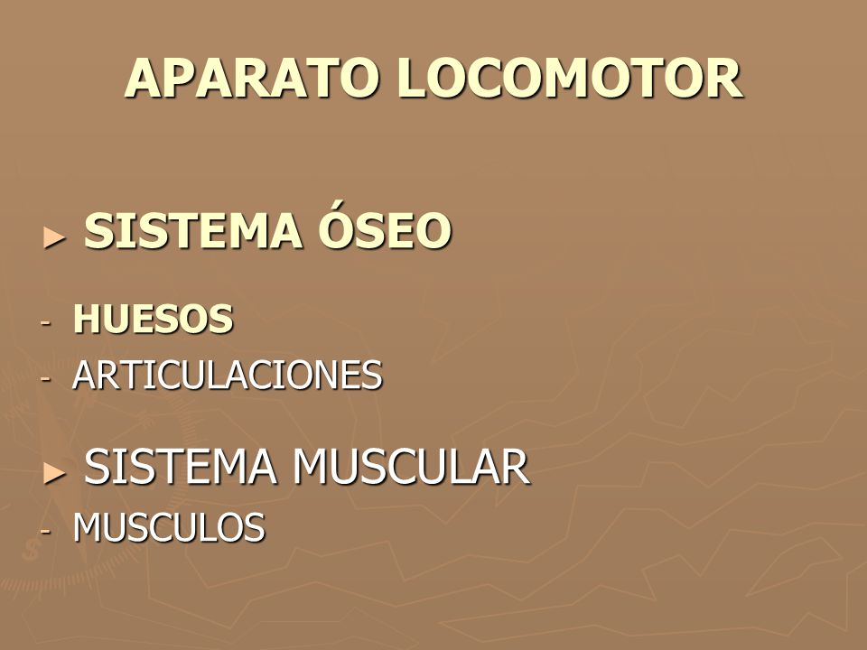 APARATO LOCOMOTOR SISTEMA ÓSEO HUESOS ARTICULACIONES SISTEMA MUSCULAR