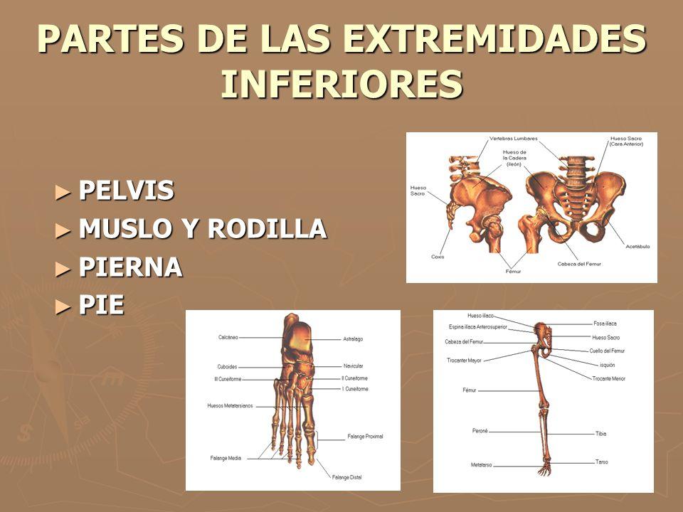 PARTES DE LAS EXTREMIDADES INFERIORES