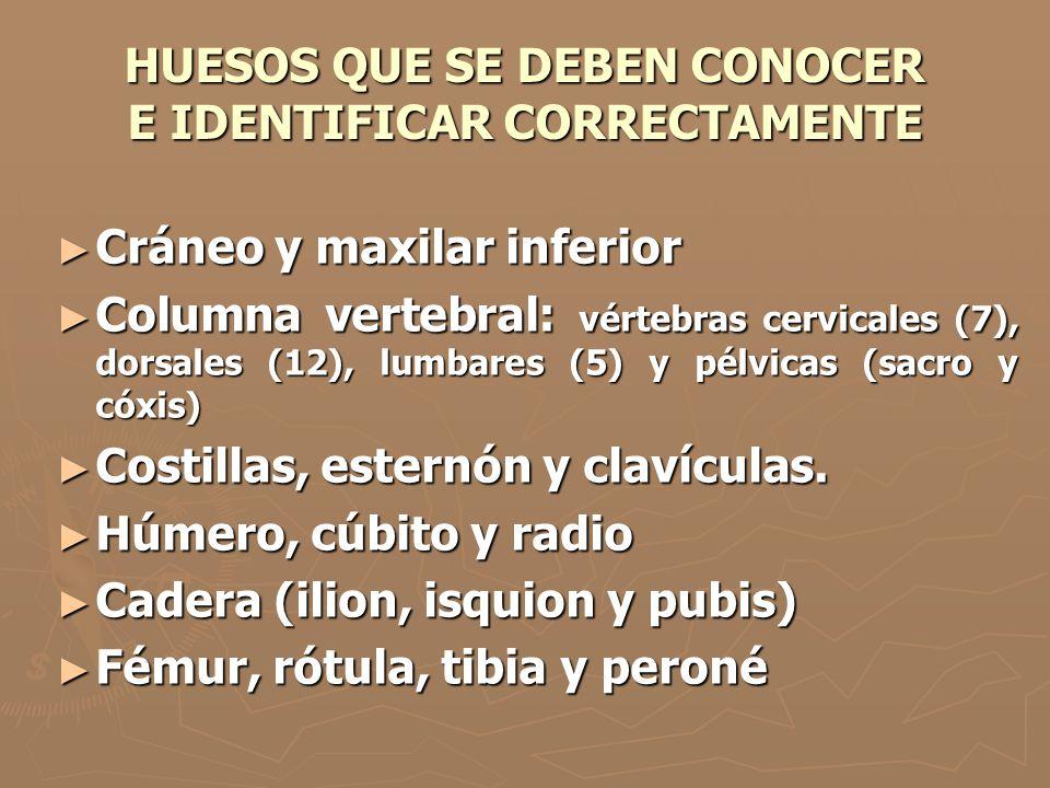 HUESOS QUE SE DEBEN CONOCER E IDENTIFICAR CORRECTAMENTE
