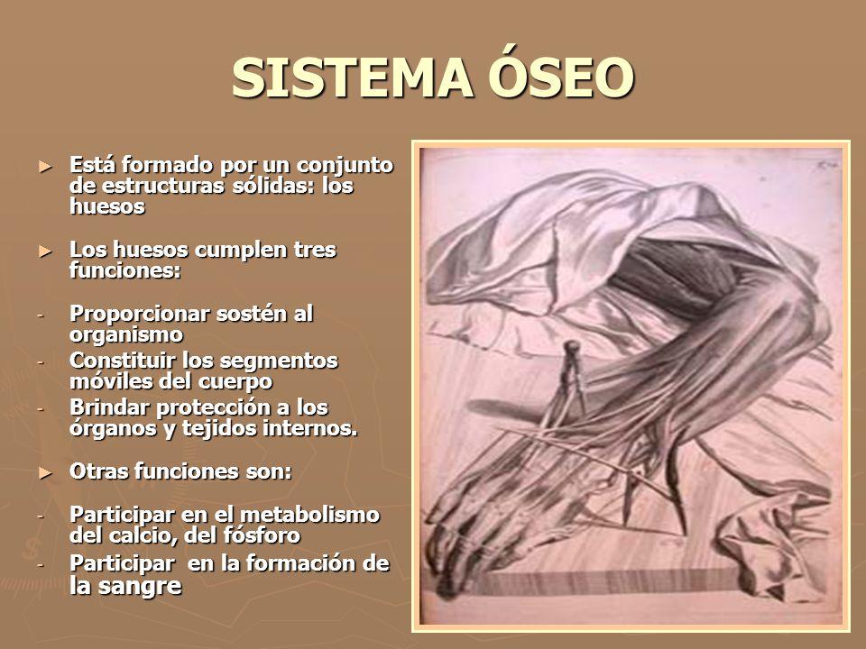 SISTEMA ÓSEO Está formado por un conjunto de estructuras sólidas: los huesos. Los huesos cumplen tres funciones: