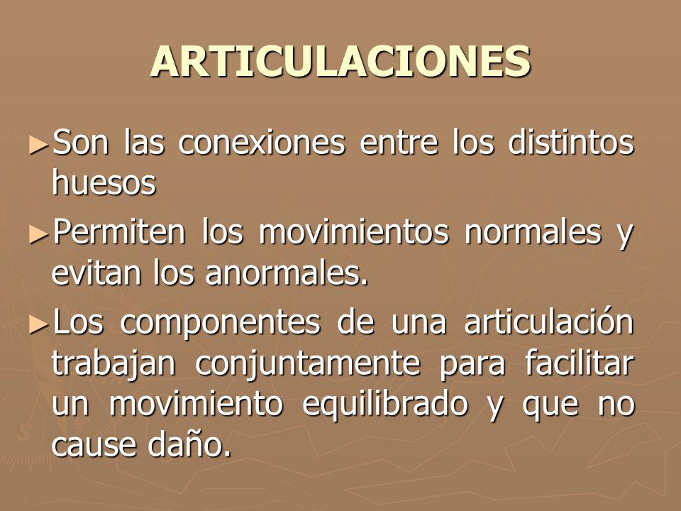 ARTICULACIONES Son las conexiones entre los distintos huesos