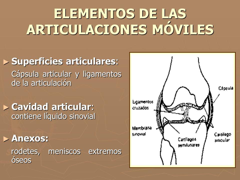 ELEMENTOS DE LAS ARTICULACIONES MÓVILES