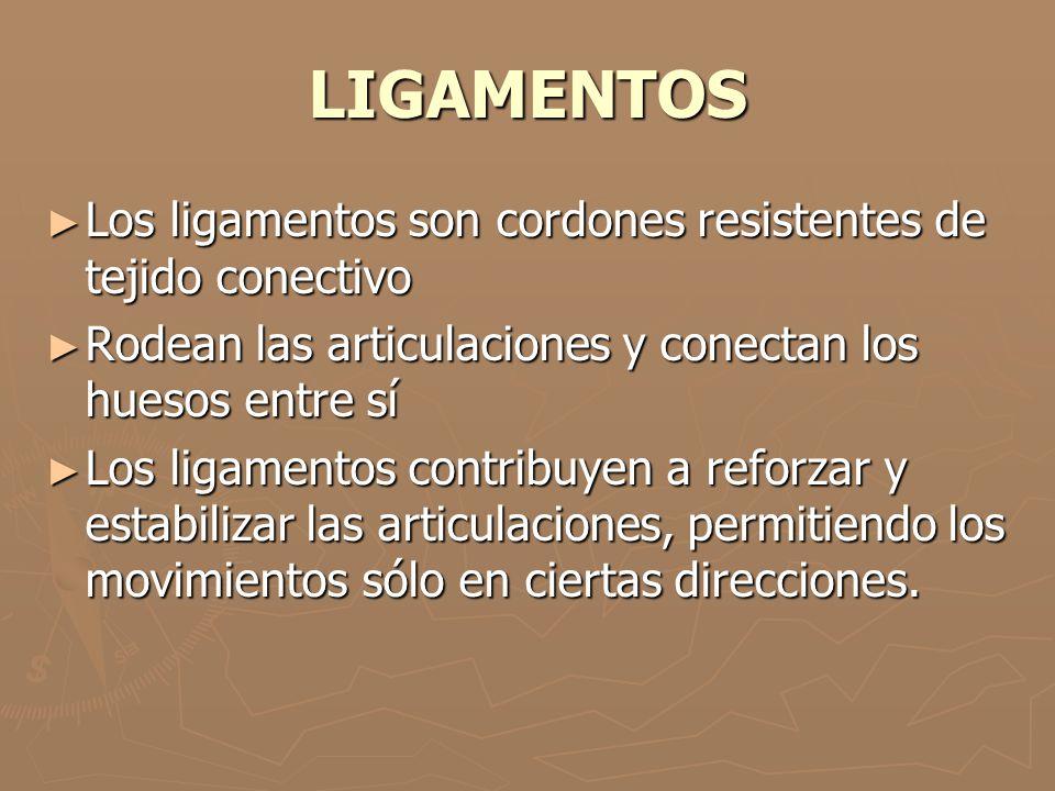LIGAMENTOS Los ligamentos son cordones resistentes de tejido conectivo