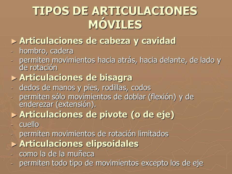 TIPOS DE ARTICULACIONES MÓVILES