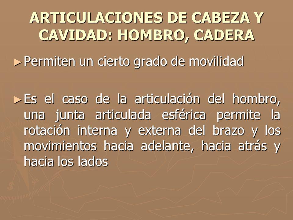 ARTICULACIONES DE CABEZA Y CAVIDAD: HOMBRO, CADERA