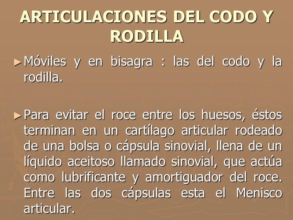 ARTICULACIONES DEL CODO Y RODILLA