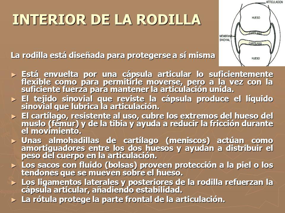 INTERIOR DE LA RODILLA La rodilla está diseñada para protegerse a sí misma.
