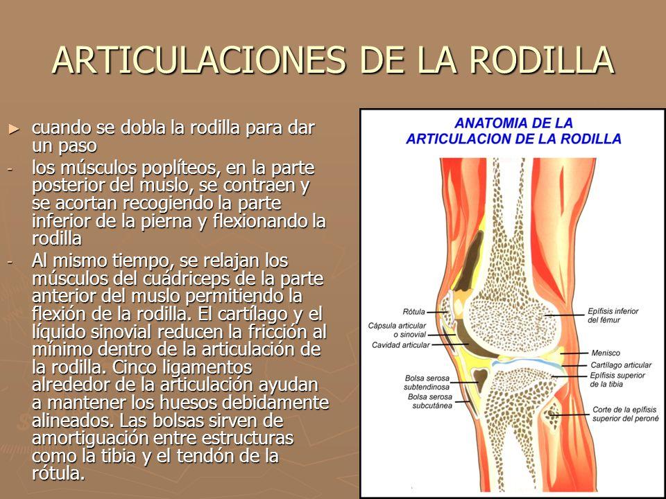 ARTICULACIONES DE LA RODILLA