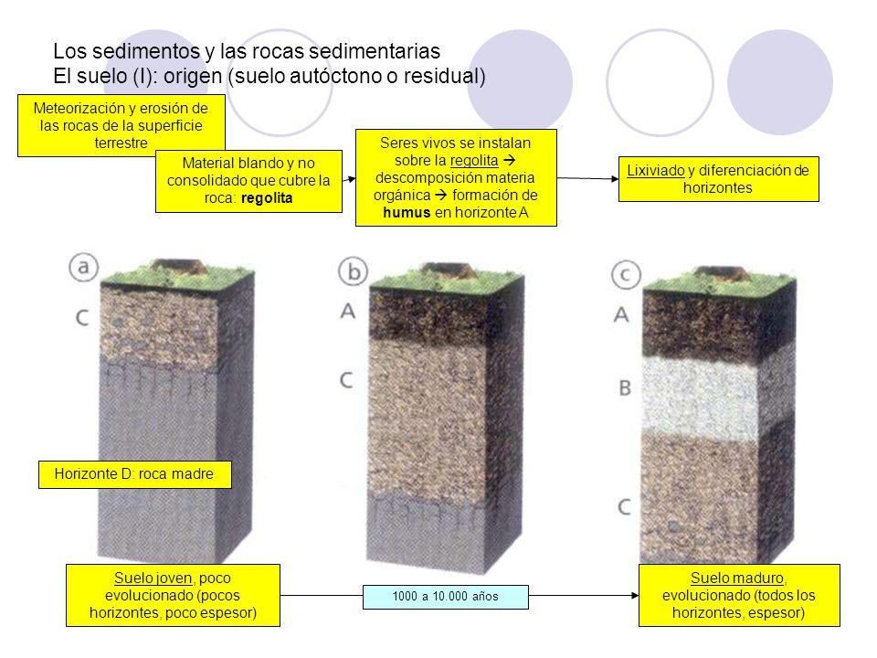 Los sedimentos y las rocas sedimentarias El suelo (I): origen (suelo autóctono o residual)