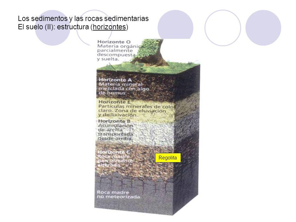 Los sedimentos y las rocas sedimentarias El suelo (II): estructura (horizontes)