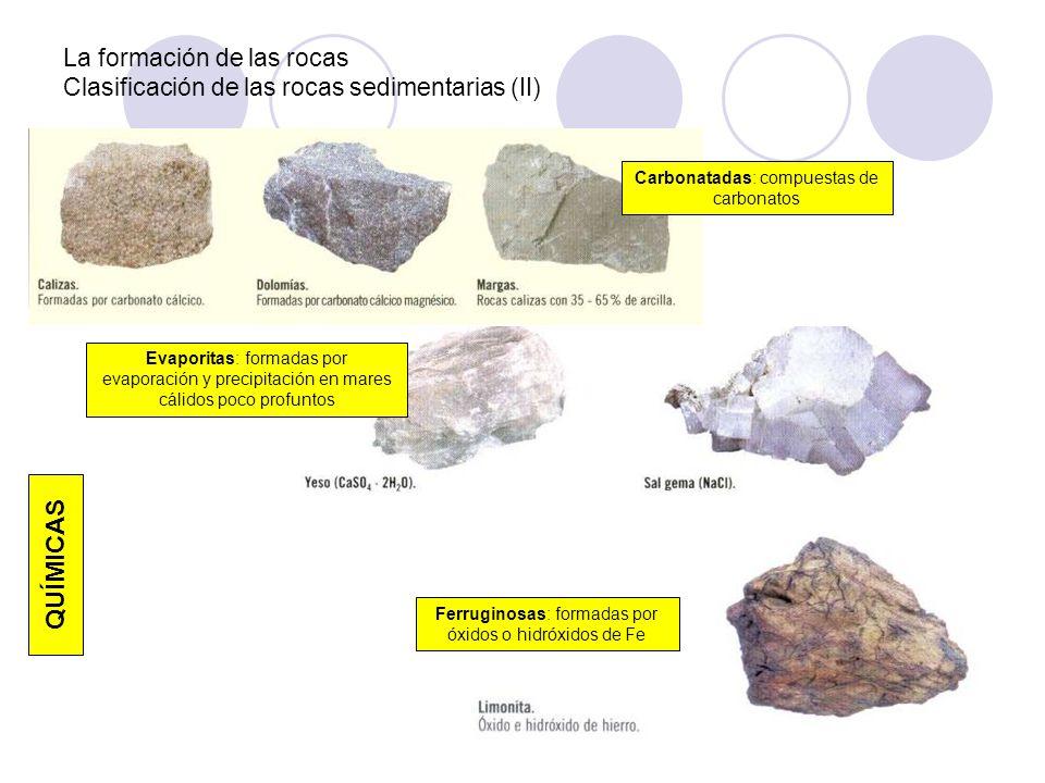La formación de las rocas Clasificación de las rocas sedimentarias (II)