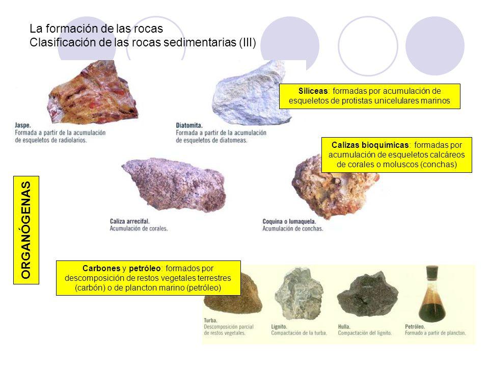 La formación de las rocas Clasificación de las rocas sedimentarias (III)