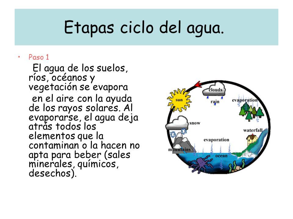 Etapas ciclo del agua. Paso 1. El agua de los suelos, ríos, océanos y vegetación se evapora.
