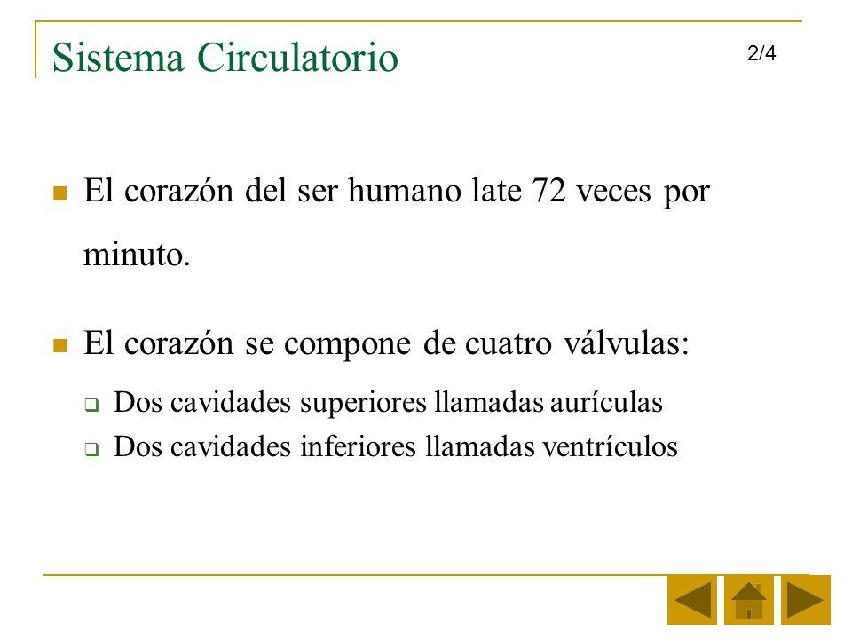 Sistema Circulatorio 2/4. El corazón del ser humano late 72 veces por minuto. El corazón se compone de cuatro válvulas: