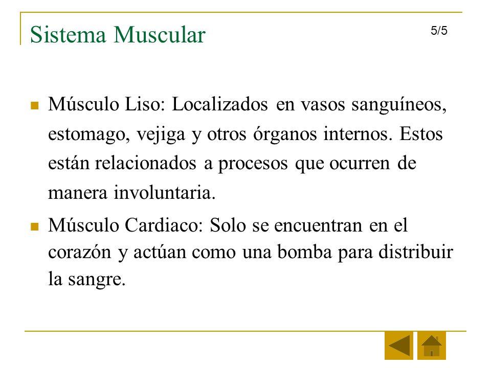 Sistema Muscular 5/5.