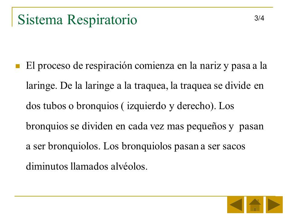 Sistema Respiratorio 3/4.