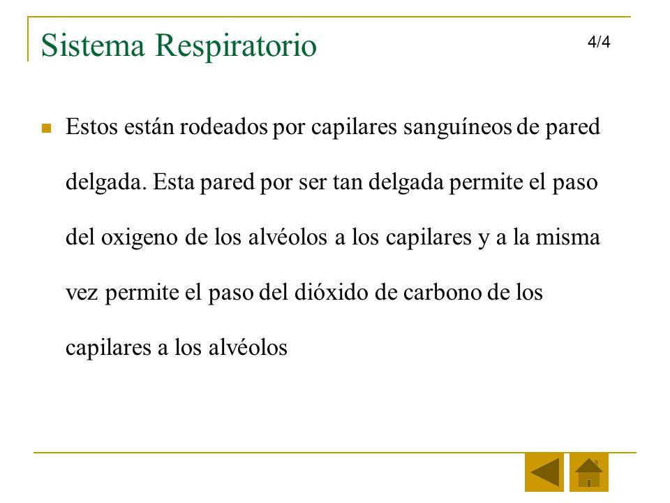 Sistema Respiratorio 4/4.