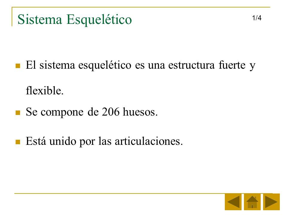 Sistema Esquelético 1/4. El sistema esquelético es una estructura fuerte y flexible. Se compone de 206 huesos.