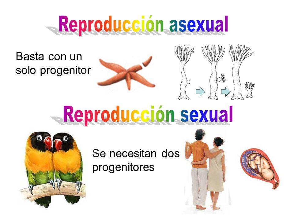 Reproducción asexual Reproducción sexual
