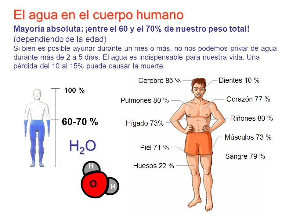 El agua en el cuerpo humano Mayoría absoluta: ¡entre el 60 y el 70% de nuestro peso total! (dependiendo de la edad) Si bien es posible ayunar durante un mes o más, no nos podemos privar de agua durante más de 2 a 5 días. El agua es indispensable para nuestra vida. Una pérdida del 10 al 15% puede causar la muerte.