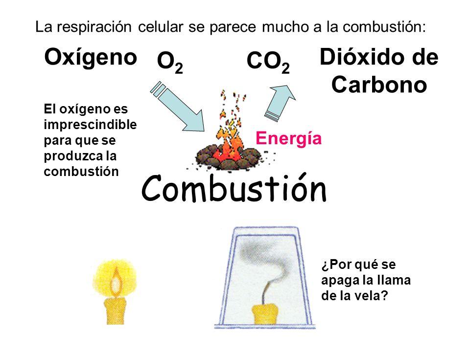 Combustión Oxígeno Dióxido de Carbono O2 CO2 Energía