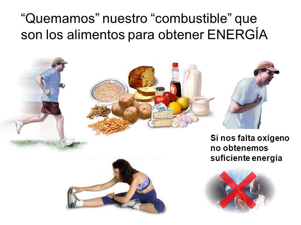 Quemamos nuestro combustible que son los alimentos para obtener ENERGÍA