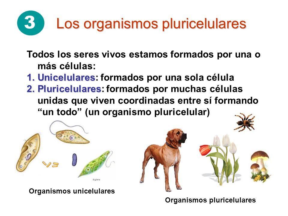 3 Los organismos pluricelulares